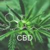 Olio di CBD (Cannabidiolo) – Un potente rimedio naturale per la nostra salute