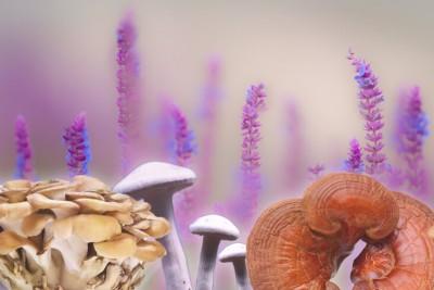 Funghi medicinali: false credenze e salute epatica