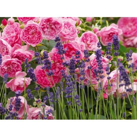 Oli essenziali da fiori e resine